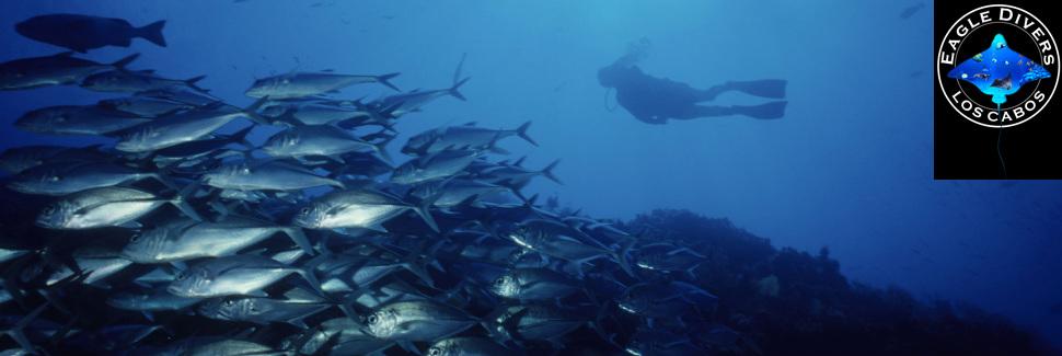 Cabo PADI Courses - Cabo Eagle Divers
